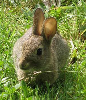 20040806-rabbit.jpg