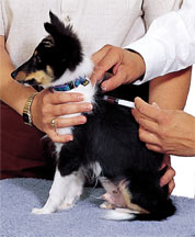 puppy-vaccination-schedule.jpg