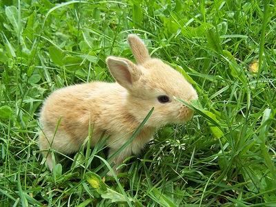 grass-rabbit.jpg