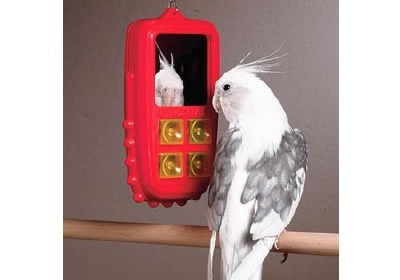 bird-cell-phone-pets-mirror.jpg