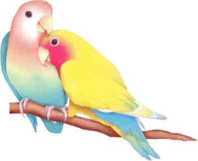 lovebirdss.jpg